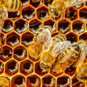 Join the Hive and Elevate Your NetDocuments | Legal Document Management