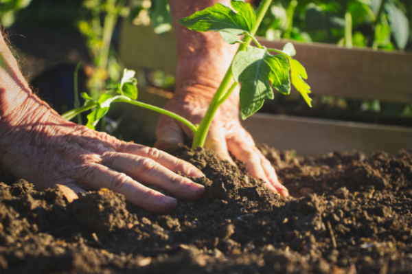 Tending Your Organizational Garden: Cultivating a Culture of Learning and Growth | Law Firm Business Consultants